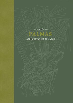 COLECCIÓN DE PALMAS. JARDÍN BOTÁNICO CULIACÁN